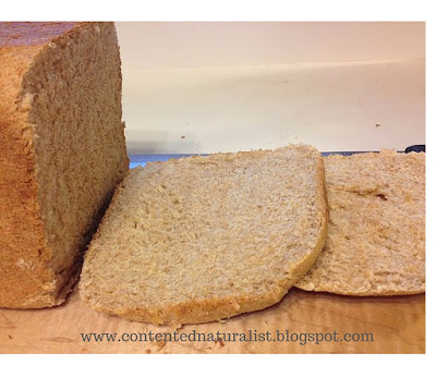 The bread has a nice even crumb, or texture, without air pockets and dense lumps.