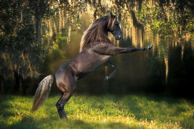 Un altro splendido stallone