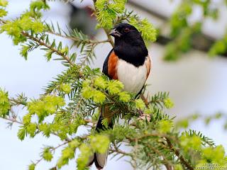 %D8%B7%D9%8A%D9%88%D8%B116 صور رمانسية طبيعية لأجمل الطيور 2014