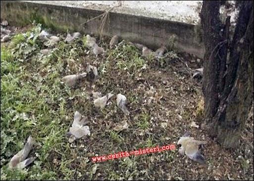 Jatinga, Desa Misterius Tempat Puluhan Burung Bunuh Diri