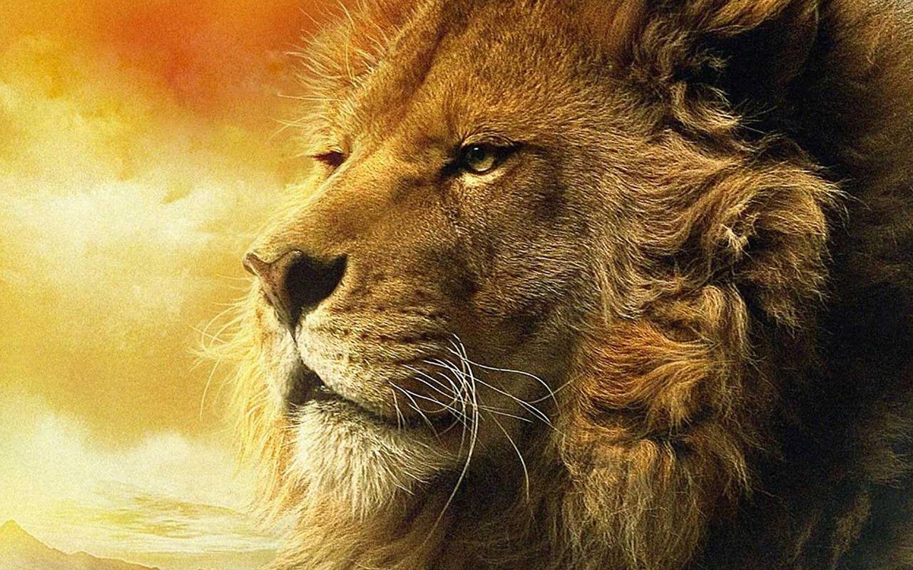http://2.bp.blogspot.com/-lO8CU7SyqPI/UCZMXtAsmHI/AAAAAAAAB_I/Oc9gwDf1RTY/s1600/aslan_narnia_lion_hd_widescreen_wallpapers_1280x800.jpg