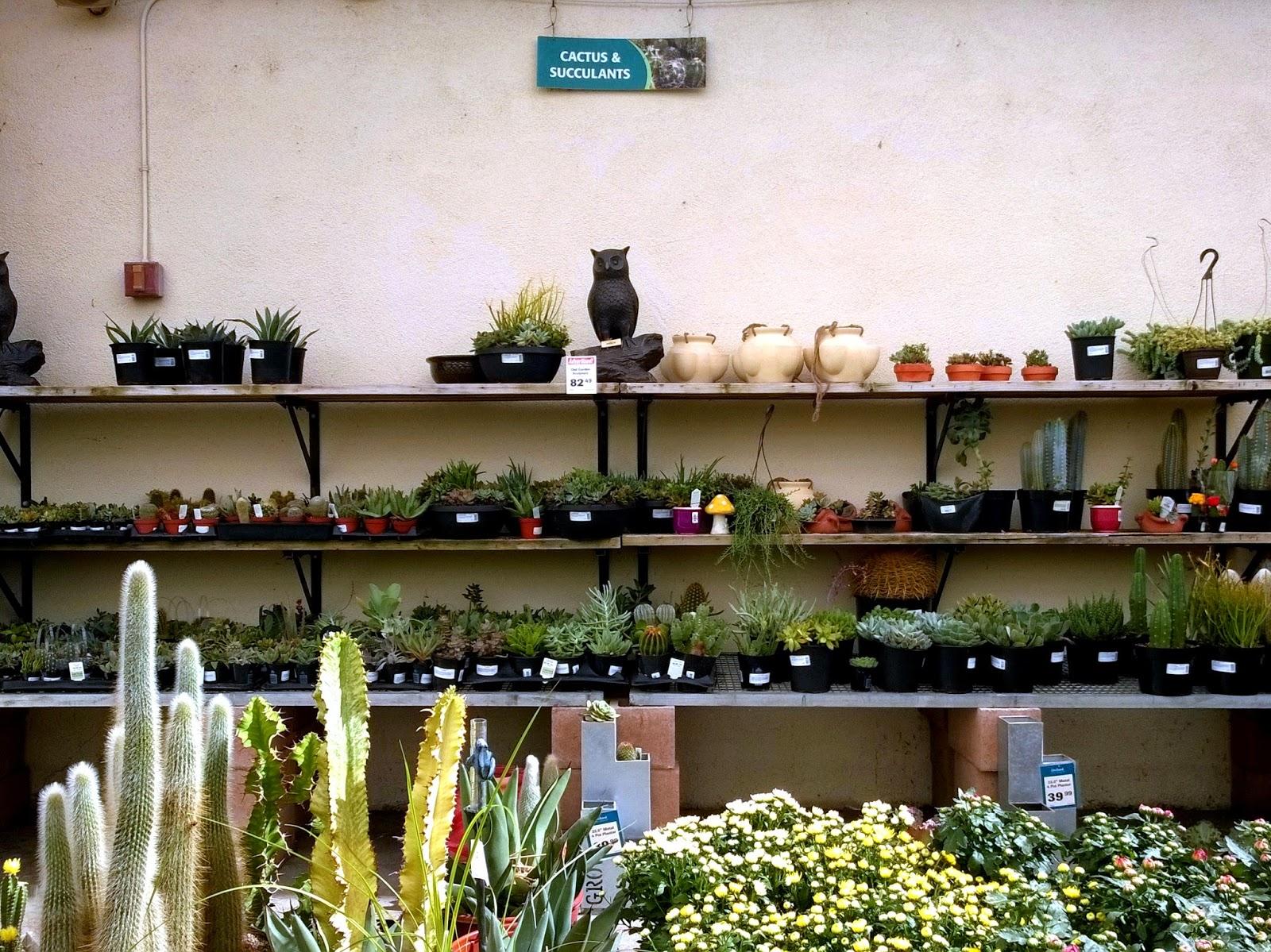 Cactus & Succulants