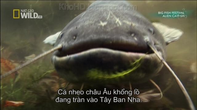 Monster Fish (2010)