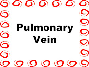 Blood Circulation: Lungs to Pulmonary Vein