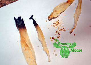 Ear Candling Results - thecrunchymoose.com