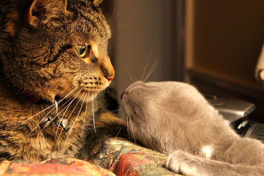 Два кота: когда в друзьях согласья нет