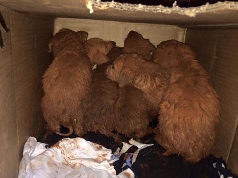 Perritos rescatados en la selva 5