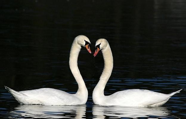 Tips Menjalani Hari Valentine Bagi Si Jomblo