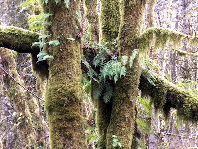 photo of trees in the Oregon Coast Range by Nancy Zavada