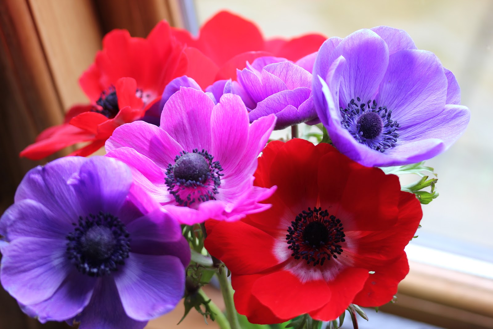 anemone coronaria de Caen group but don t be fooled by the bor