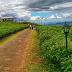 Wisata Alam Malino, Lebih Dari Sekedar Wisata Alam