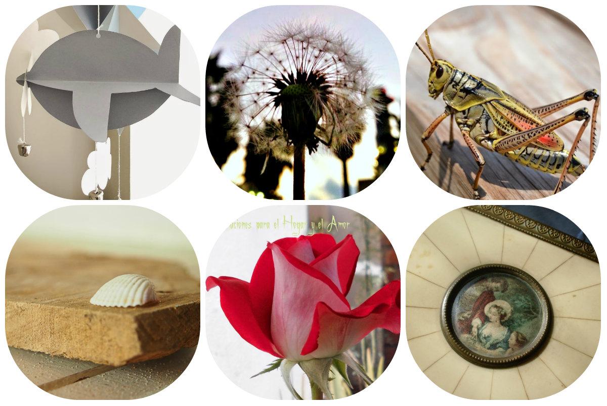premios, plan-macro, collage, modboard, fotografia