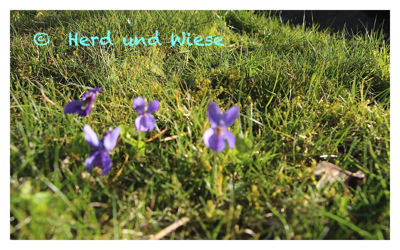 Viola - Die Sonne Kann Warten