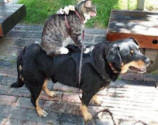 Amizade entre cão, gato e rato