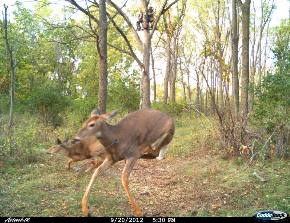 Marian 39 S Hunting Stories Etc Etc Etc Great Deer