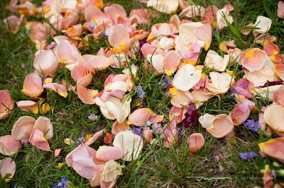 rose petals, colored rose petals, wedding petals, pink flower petals, purple rose petals, white rose petals,