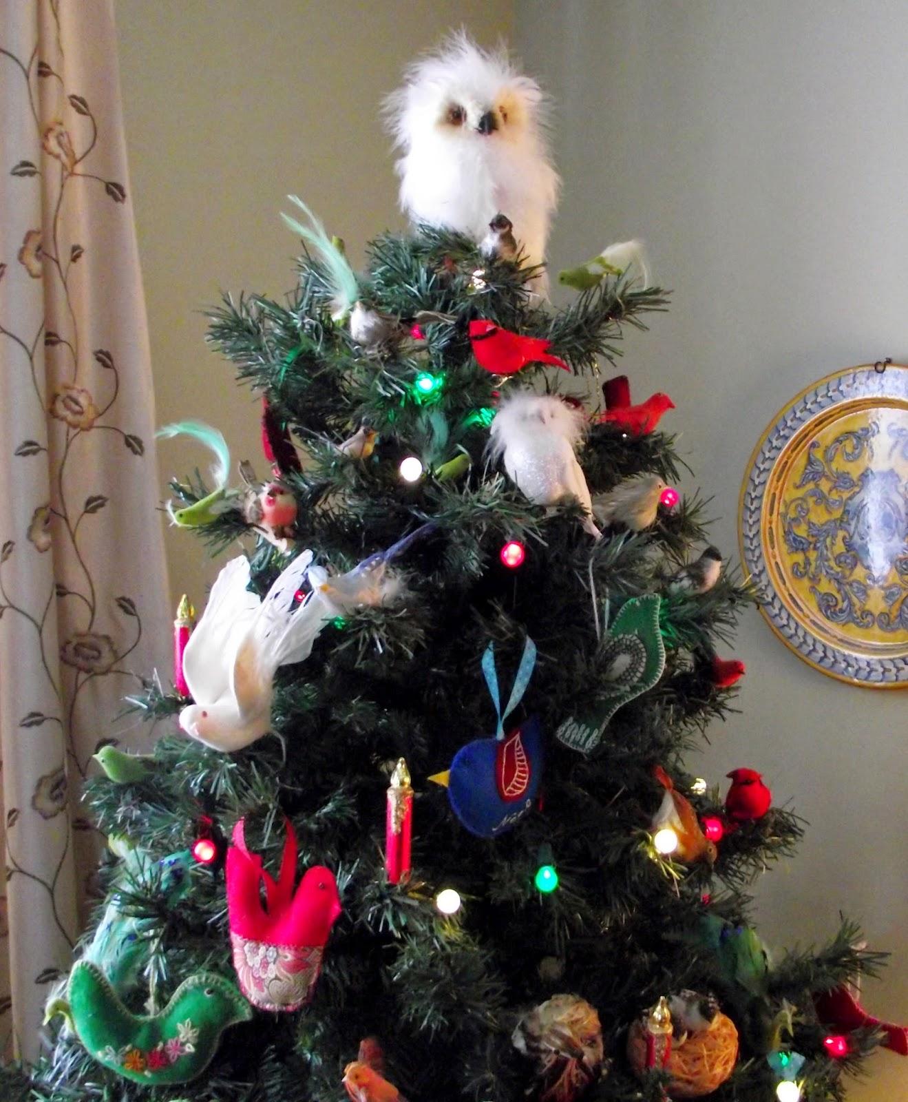 Canadian Needle Nana Snowy Owl Tree Top