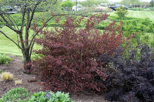 midwest groundcovers display gardens