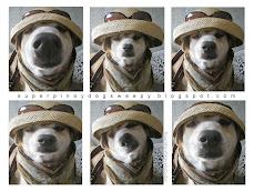 Fashion Fast Woof!
