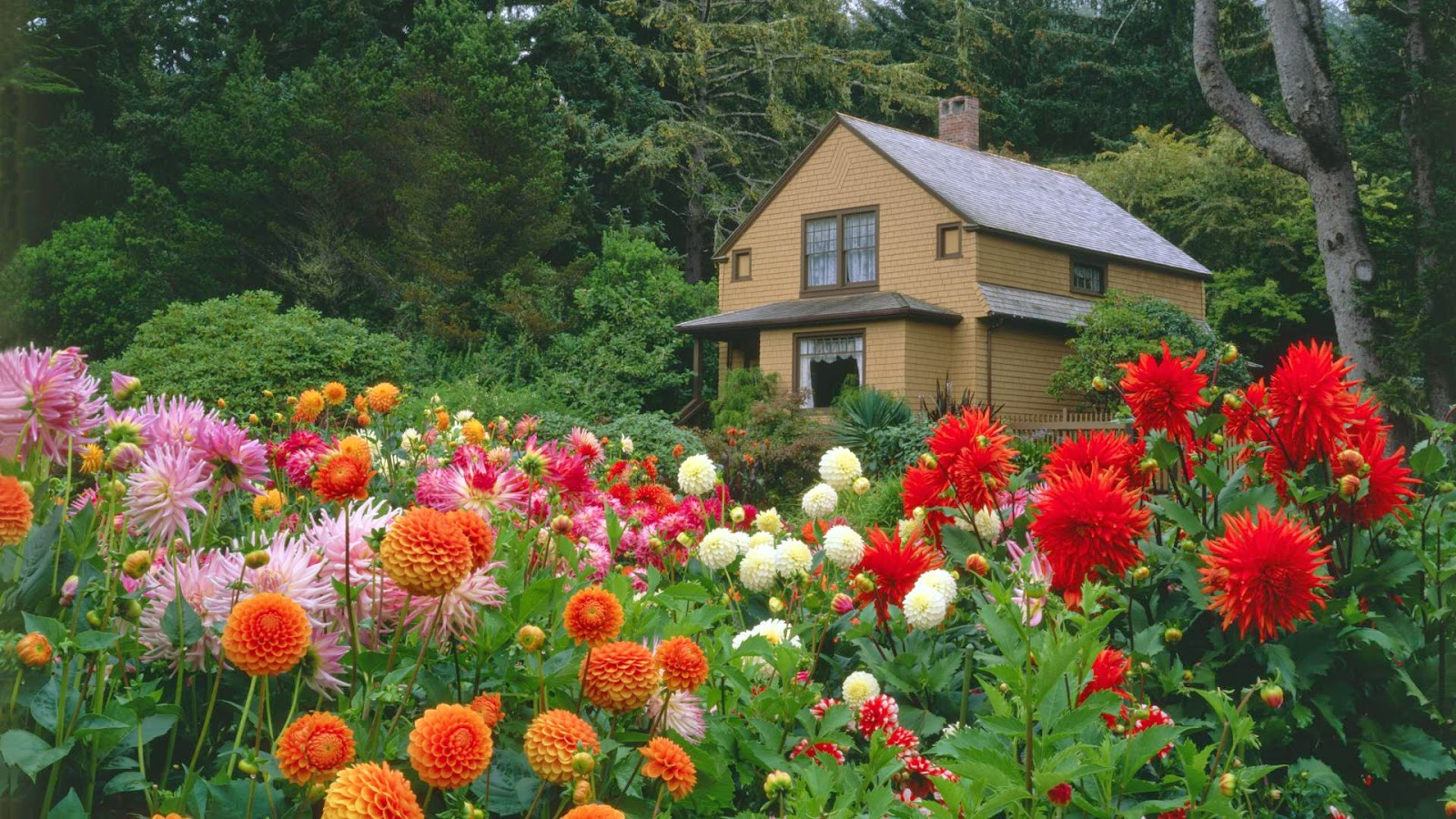 Garden flower with house for Classic house with flower garden