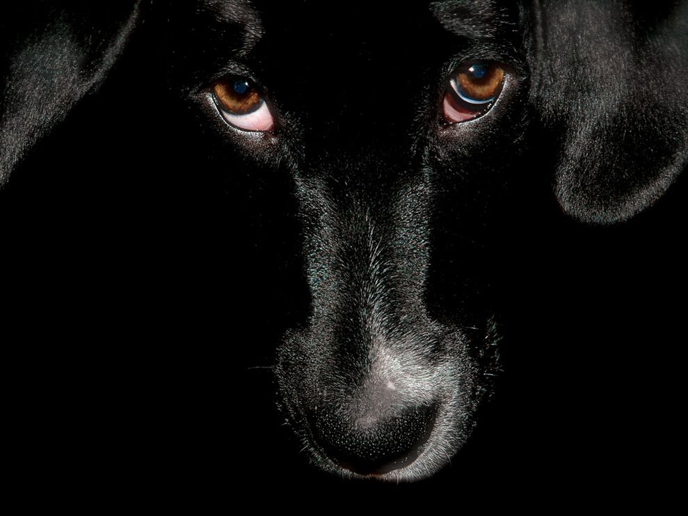 unique animals blogs black dog wallpapers for desktop
