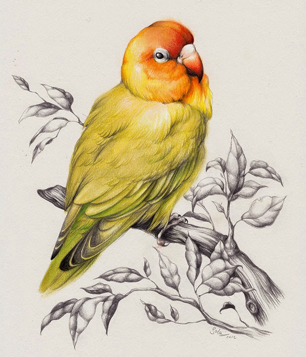 25 Best Bird Drawings For Your Inspiration! - Fine Art And You - Painting| Digital Art ...