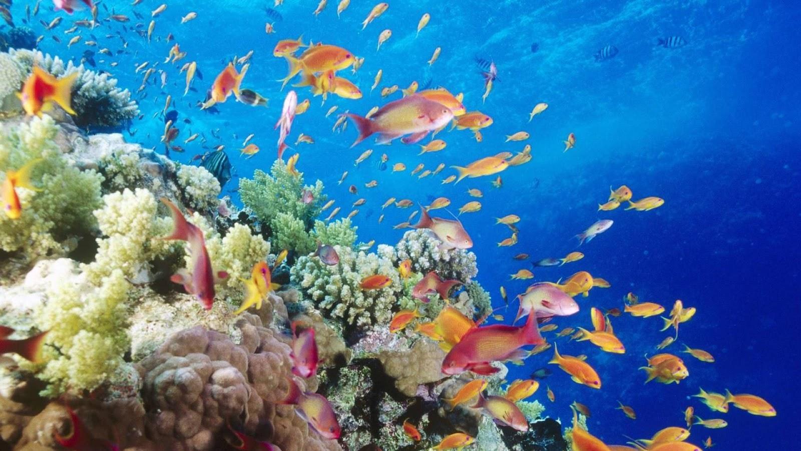 Te lo digo y te lo comento cuidando a los peces tropicales for Peces tropicales
