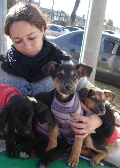 Familias protectoras de mascotas y fauna urbana novedades - Novedades para mascotas ...