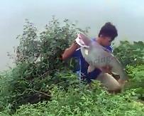 Gila Mancing Strike Ikan Patin Besar