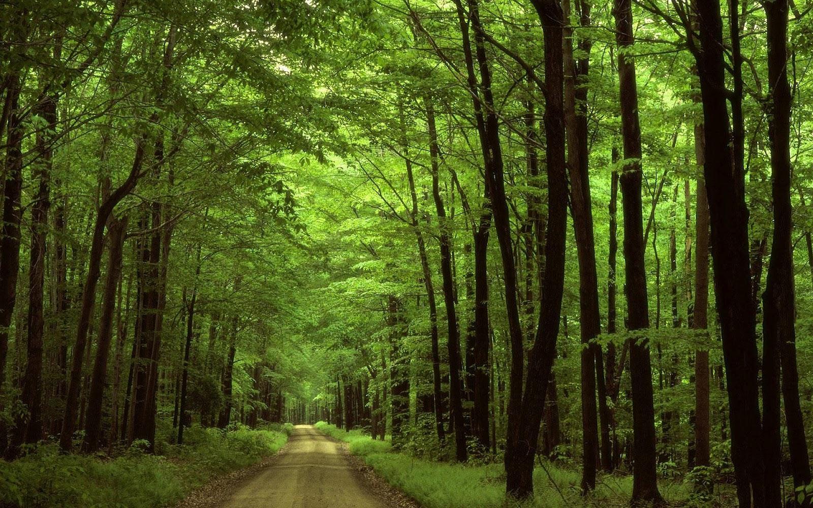 In het bos achtergrond met veel bomen langs de weg | hd bos wallpaper
