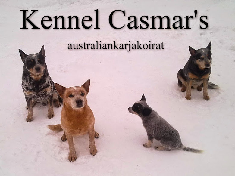 Kennel Casmar's