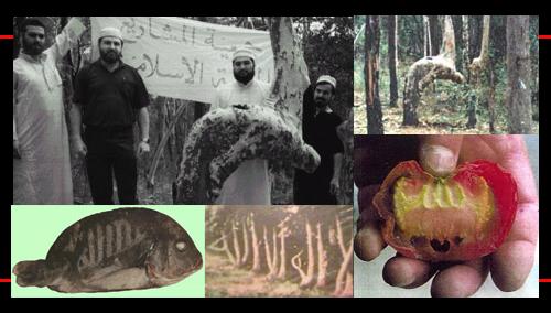 Bukti Kebenaran Allah SWT | Agama Islam