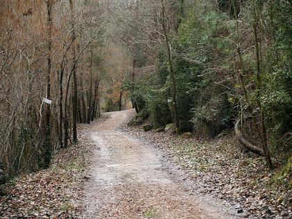 El camí travessa el Bosc dels Aurons