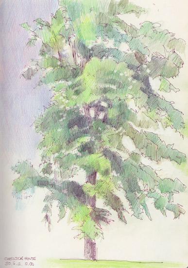 Tree at Chiswick House