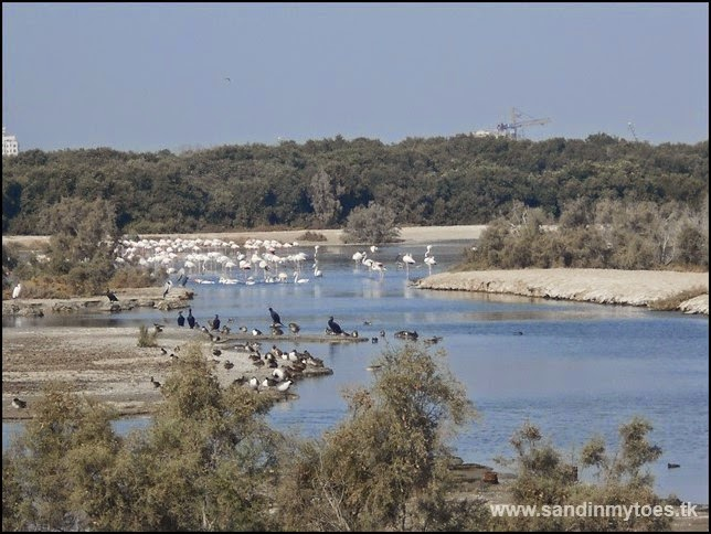 Ras Al Khor Wildlife Sanctuary, Dubai