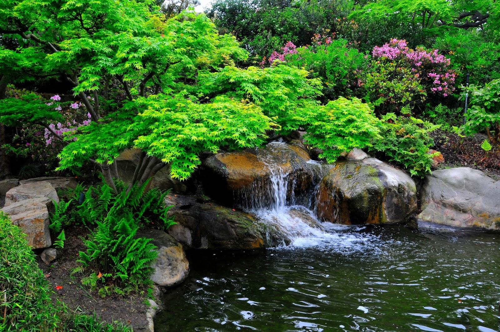 Arte y jardiner a jardin acu tico for Estanque natural