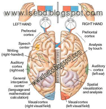 Our mind is very complicated with so many neuron of brain ...