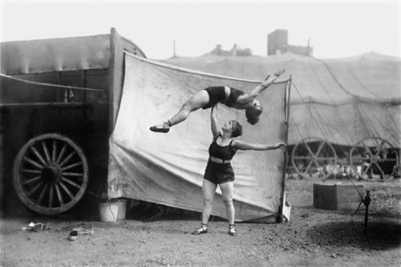 Circus 2016  Curassow