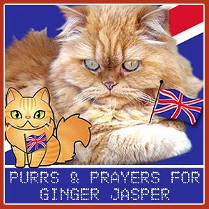 Purr for Ginger Jasper