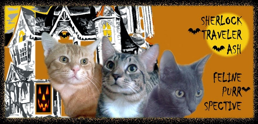 Feline Purr-spective