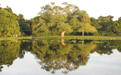 Natureza do Pantanal