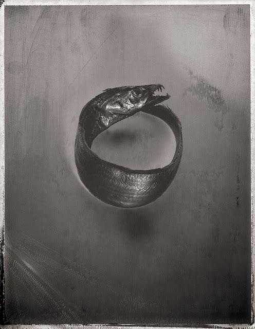 Морская жизнь на черно-белых фотографиях Дэвида Эллингсена