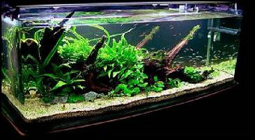 family aquarium