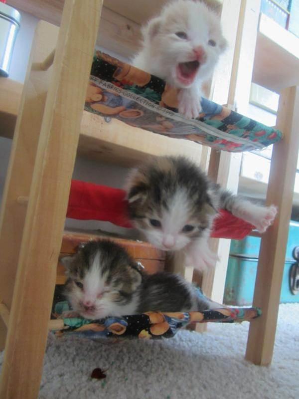 Сумасшедшие коты, фото 13