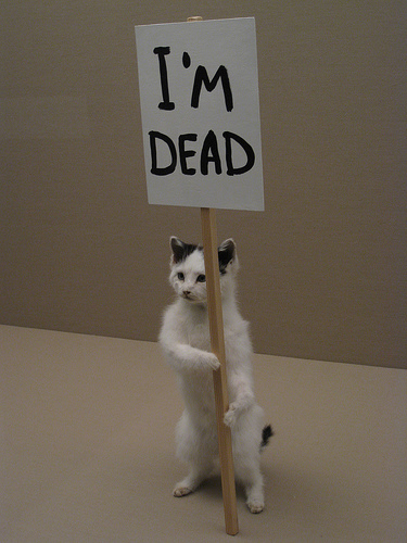 Gotcha Glass?: THERE'S DEAD CAT ON THE LINE!