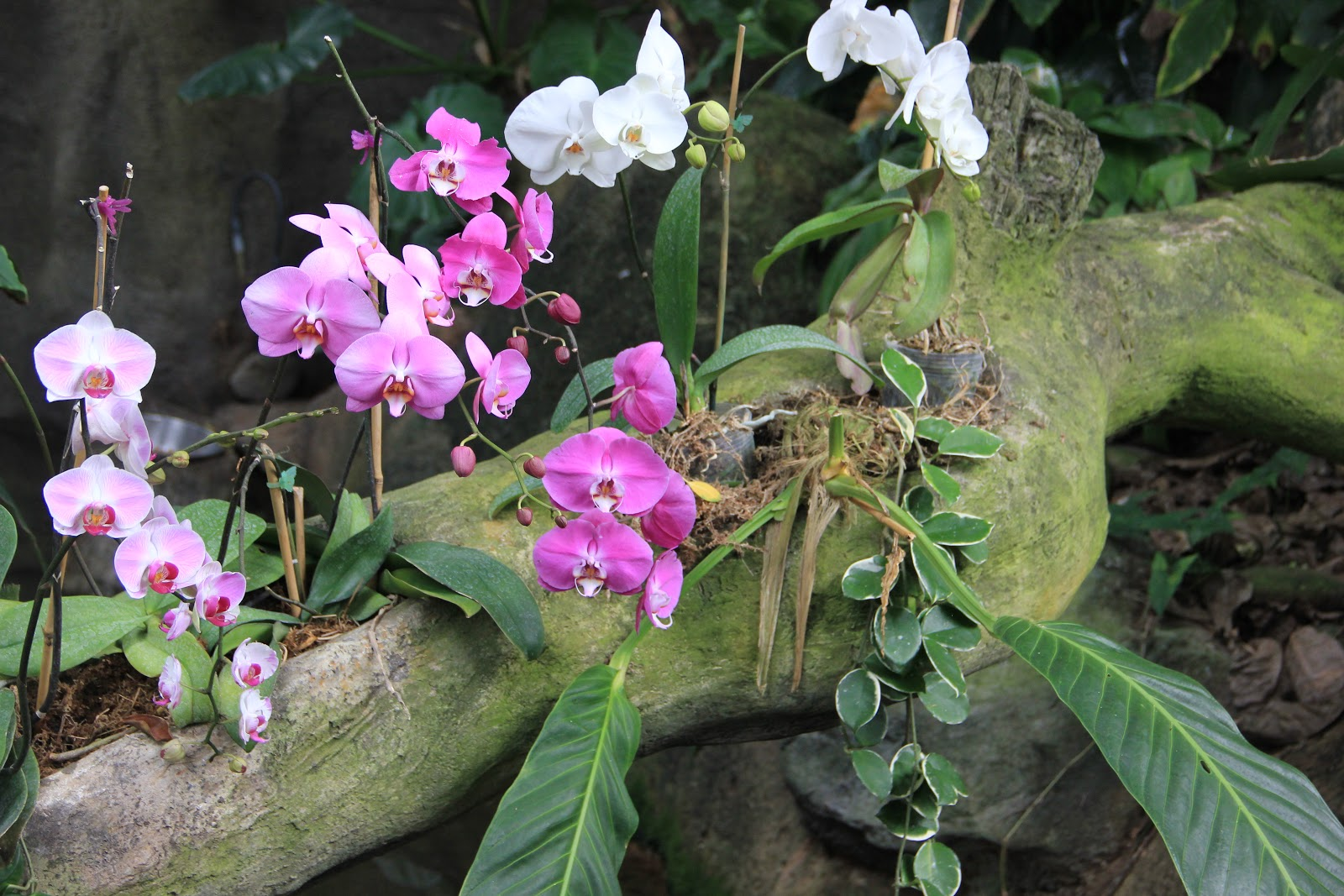 Terry Spear 39 S Blog Orchids Of The Rainforest March 13