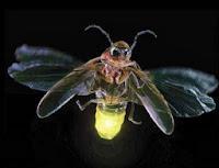Skema Rangkaian Lampu kunang-kunang