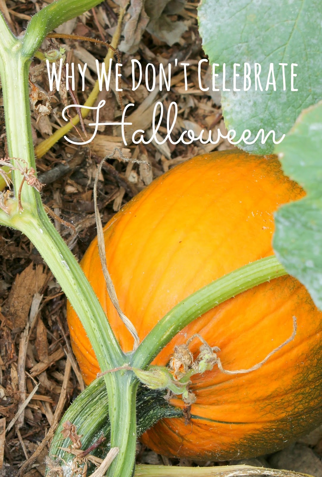 The little farm diary why we don 39 t celebrate halloween for Why do we celebrate halloween in america
