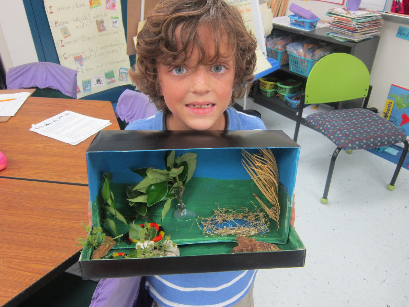mrs pacciano s post look at these habitat dioramas