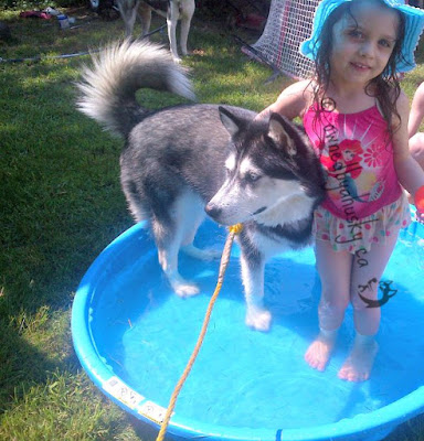 my little girl and siberian husky playing in the pool
